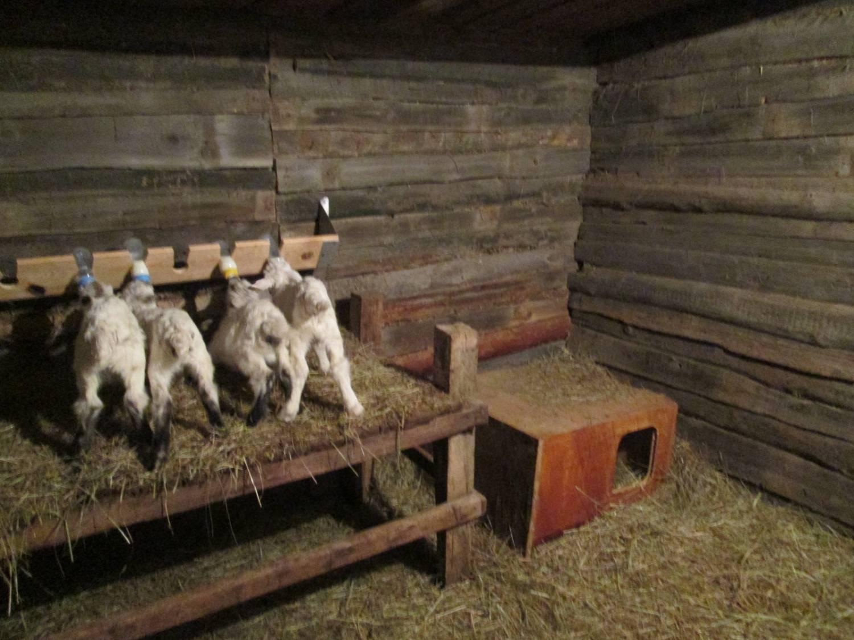Фото сарая для овец своими руками